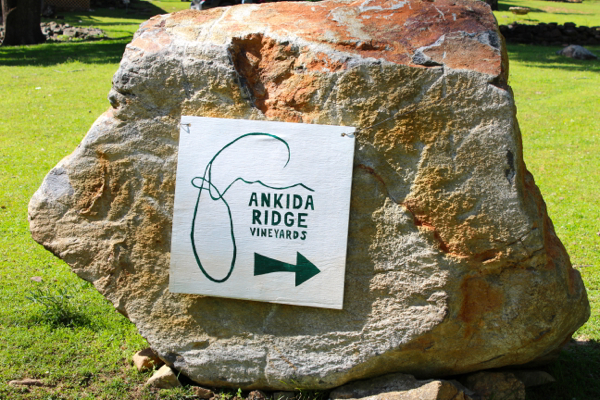 Ankida10